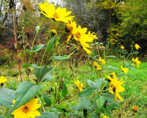 Stratford park - flowers