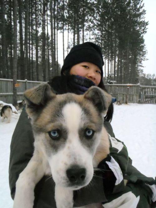 Quebec - Tremblant:  dogsledding puppy