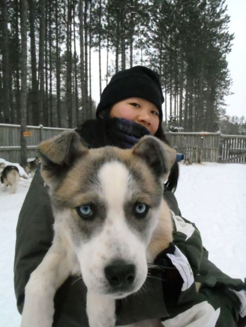 Quebec - Tremblant:  dogsledding puppy