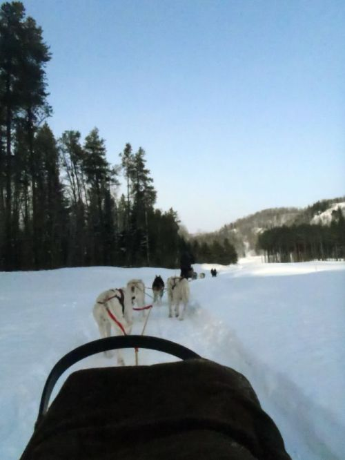 Quebec - Tremblant dogsledding