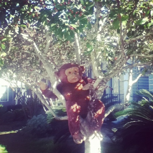 New Orleans - monkey in a tree