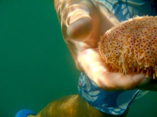 Mexico - Las Isla Ixtapa underwater creature