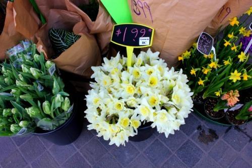 Victoria - BC daffodils