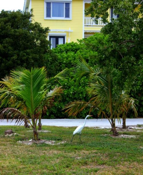 Bahamas - Abaco morning stroll