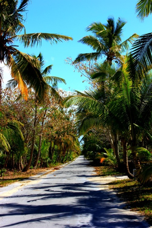 Bahamas- South Abaco road