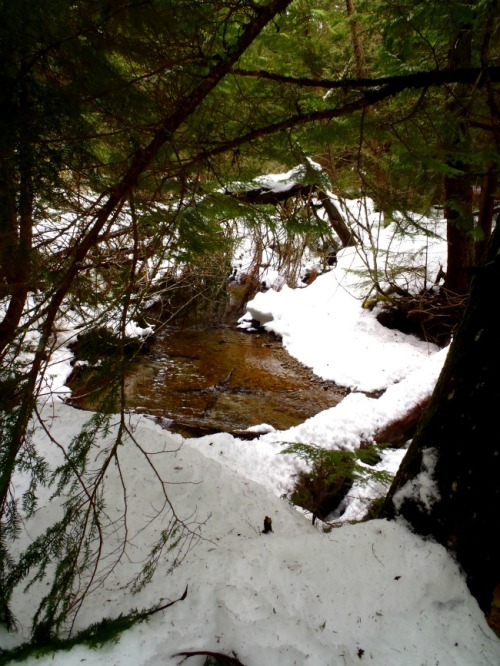 Whistler - Lost Lake snowshoe trail