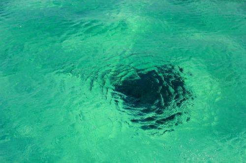 Bahamas - Abaco stingray