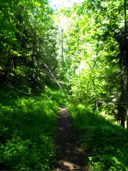 Idaho - Mineral Point trail trees