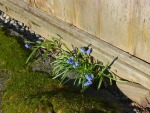 Vancouver - blue flowers