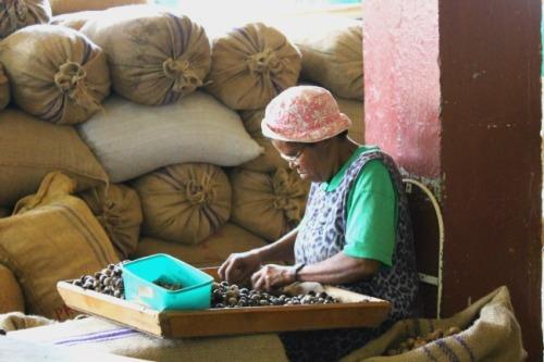 Grenada - nutmeg lady