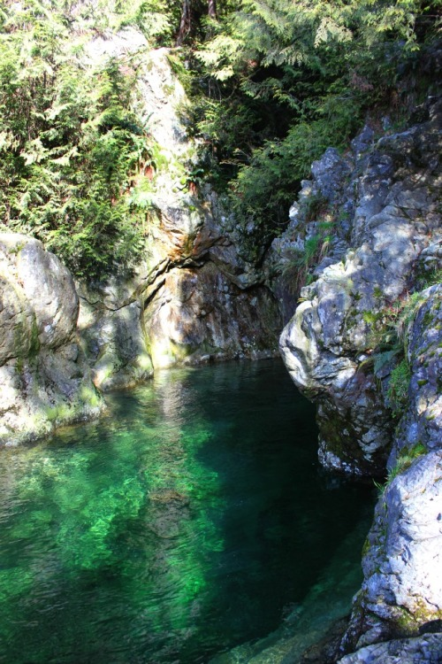 British Columbia - North Vancouver: Lynn Canyon