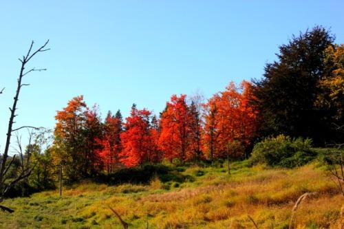 British Columbia - autumn