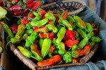 California - hot peppers