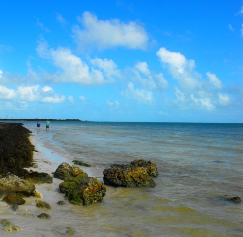 Florida - Calusa Beach rocks