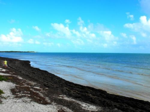 Florida - Calusa beach north