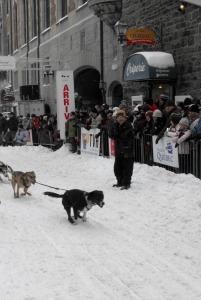 Quebec City - dogsledding at carnival
