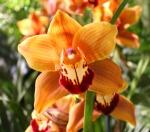 Philadelphia Flower Show orchid