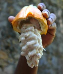 St Lucia - cocoa