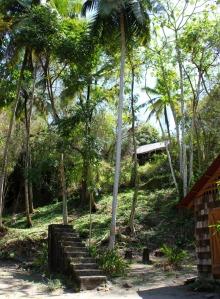 St Lucia - plantation 1