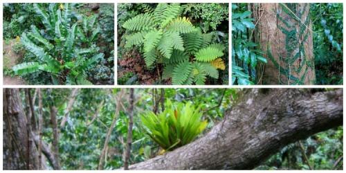 St Lucia - rainforest collage