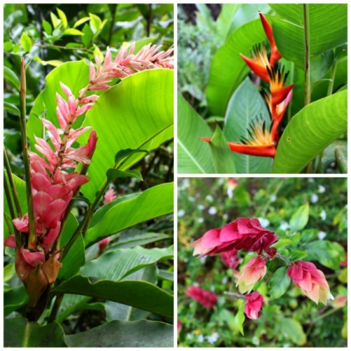 St. Lucia - rainforest flower collage