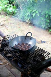 Ecuador - rainforest cocoa beans