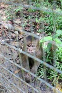 Ecuador - rainforest monkey