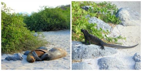 Ecuador - Galapagos animals collage