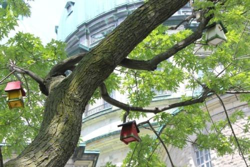 Montreal - birdhouses