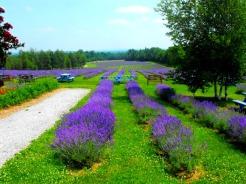 Bleu Lavande, Eastern Townships of Quebec