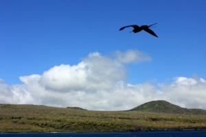 Ecuador - Galapagos frigate bird