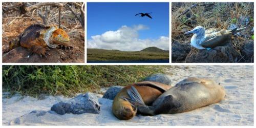 Ecuador - Galapagos group