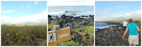 Ecuador - Galapagos Isla Lobos collage
