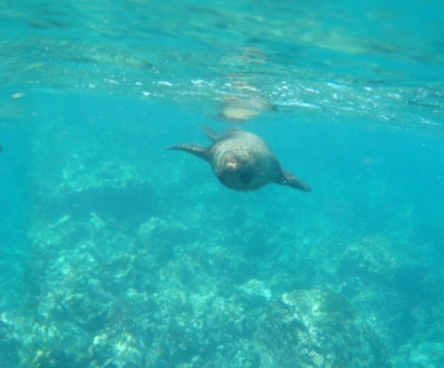Ecuador - Galapagos Is. sea lion