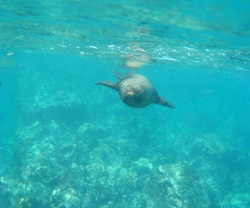Ecuador - Galapagos Is. sea lion