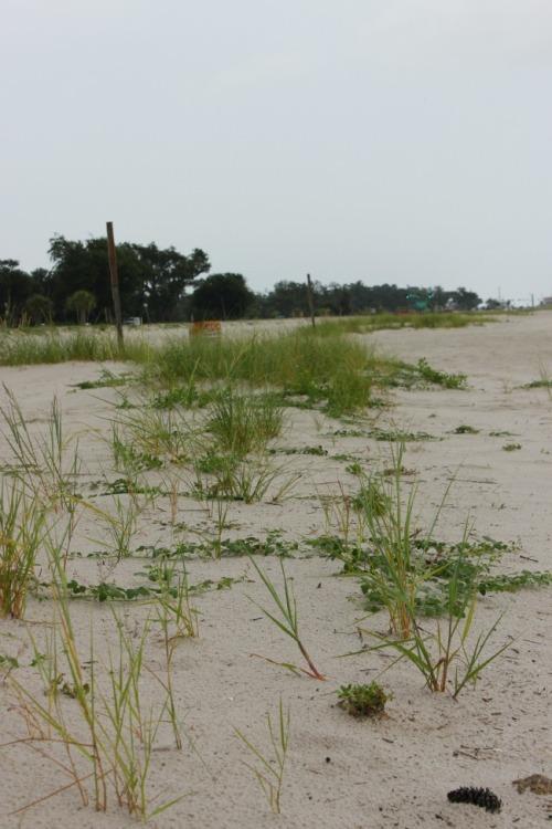 Mississippi - PC beach