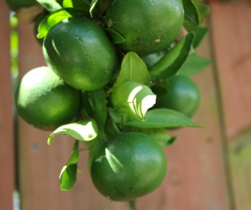 New Orleans - limes