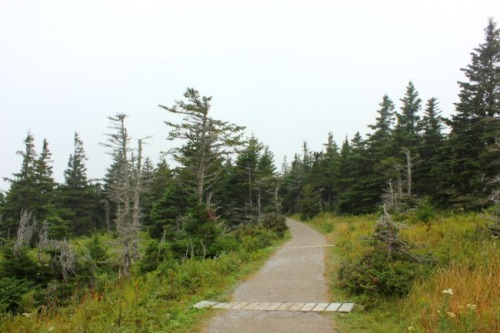 NS - Skyline Trail