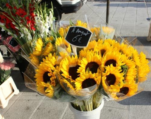 France - Marseille sunflower