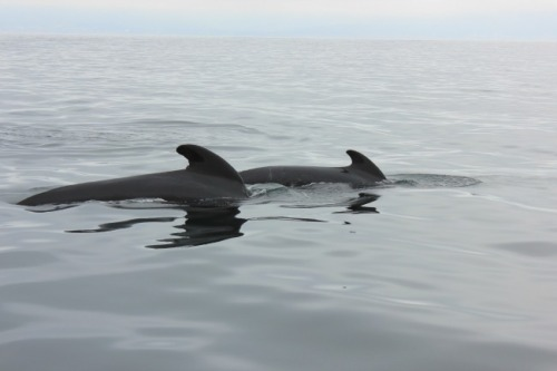 NS - PB whales