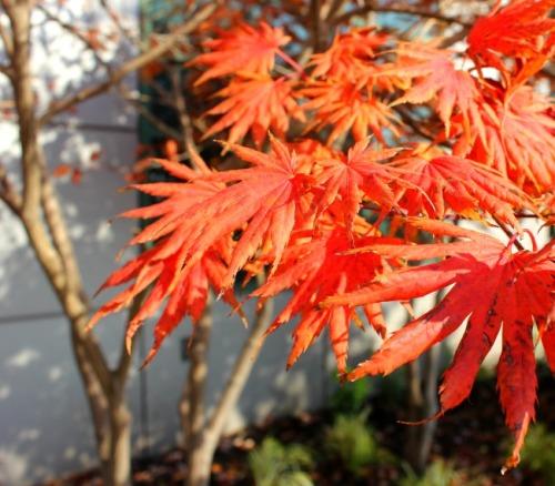 BC - Vancouver autumn colour