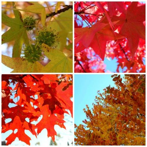 Vancouver - autumn