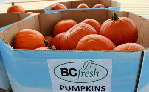 BC - fresh pumpkins