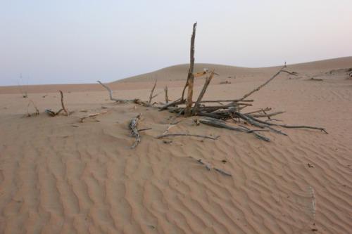 UAE - Dubai desert vegetation