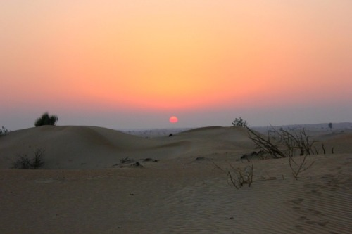 UAE - desert sunset