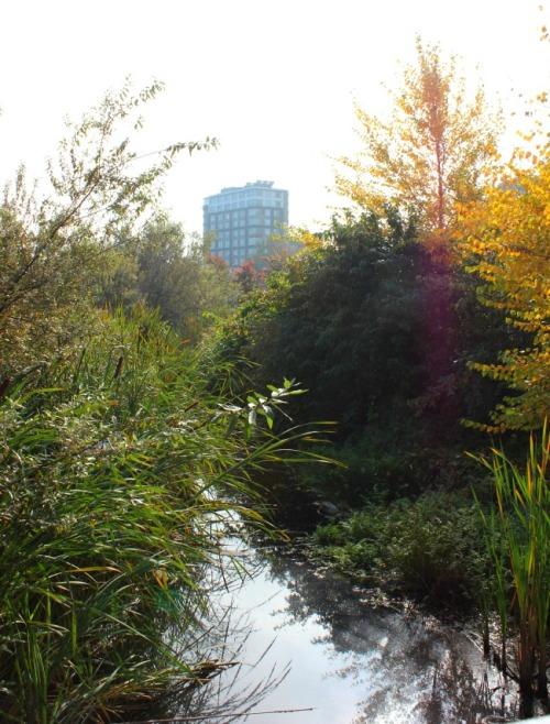 Vancouver - creek