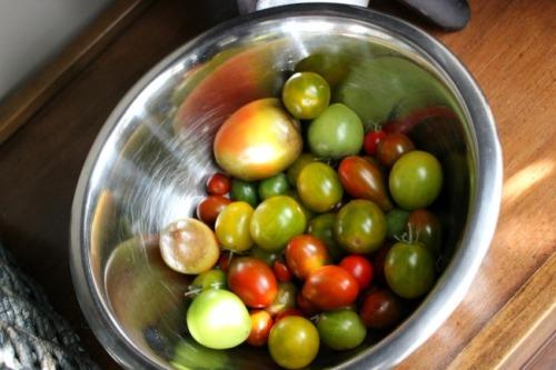 Vancouver - tomato garden
