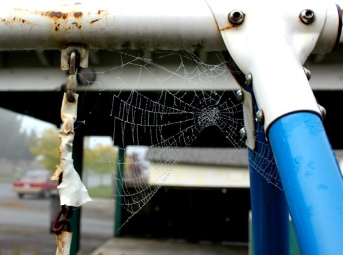 Vancouver - spider's web