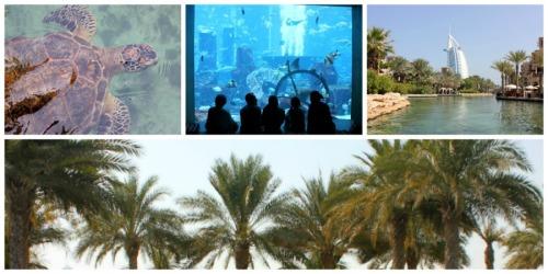 Dubai collage b
