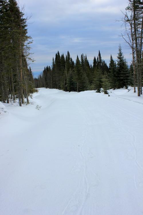 Quebec - Le Massif snowshoe tracks